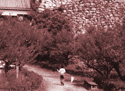 高知城にて虫取り