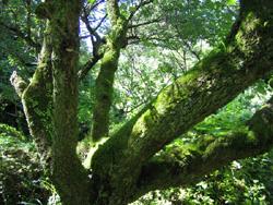 深い緑のドレスをまとった木