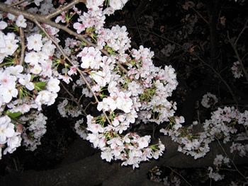 高知城『花回廊』