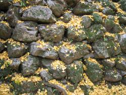 石段とイチョウの落ち葉