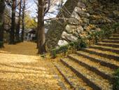 階段とイチョウの落ち葉