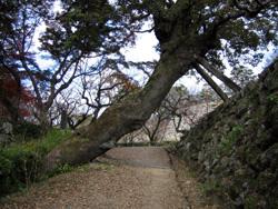 エノキ(広葉樹)